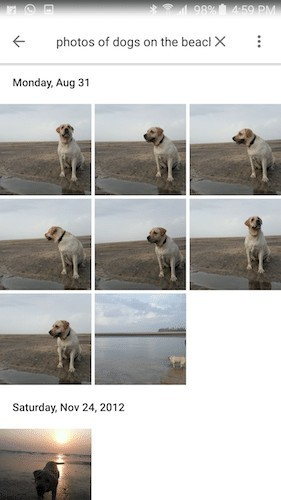 photos of dogs on the beach