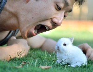 Frightened Baby Rabit