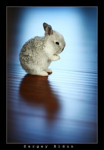 Lonely Rabbit